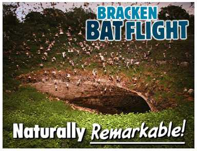 Bracken Bat Flight