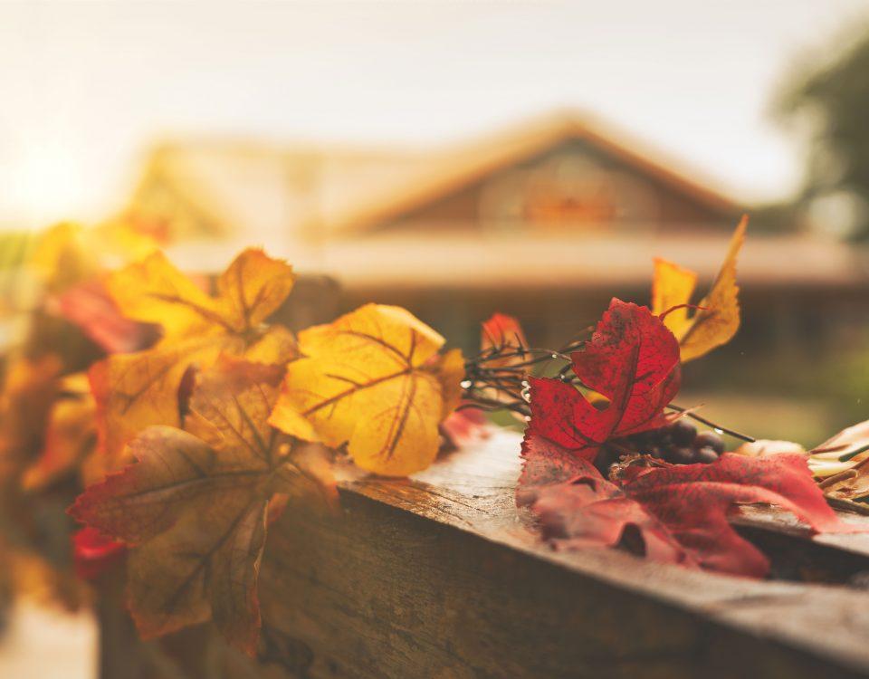 Fall Leaves | Natural Bridge Caverns